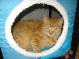 Ginger in her Cat House by Hellsender