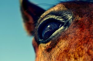 The Horses Eye by wolfgal04