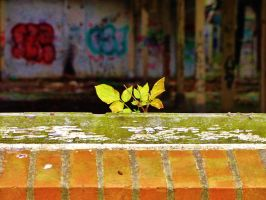 abandoned furniture plants XVI by tussy1483