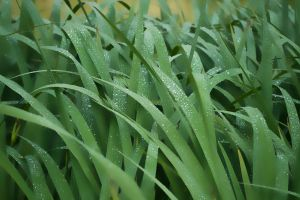 Green drops by PaalM