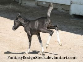 Foal - Abe 2 by FantasyDesignStock