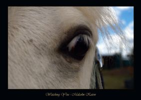 Watching You by FireflyPhotosAust