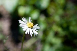 marguerite by gargamelix