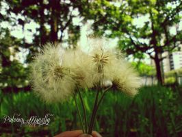Make A Wish by PMinelly