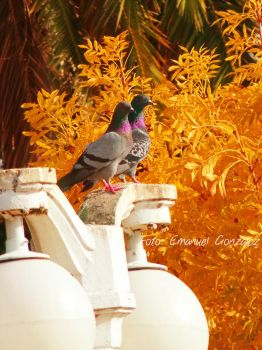Autumn Birds Love by Rockeeterl