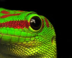 Day Gecko by Enkased