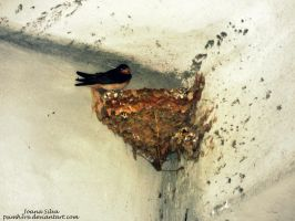 Swallow by PsImH3re