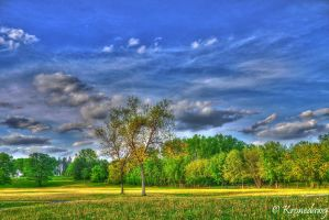 Field of dreams... not the movie by chriskronen