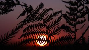 ferny sunset by tayfunes