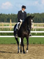 Warmblood dressage by wakedeadman