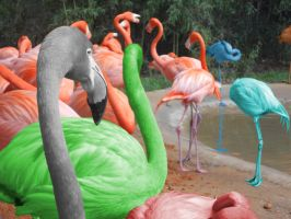 Flomingoes at Fort Worth Zoo by halfasn