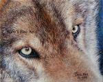 'Wolf Eyes' - Realism by robybaer