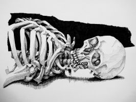 skeleton still life 2 by styrofoam-SKELLETON