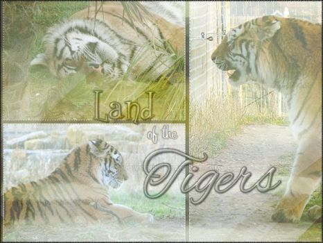 Land of the Tigers by SorrowsEnd