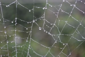 Spider Web 2 by edthefred