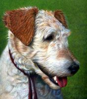 Wire Fox Terrier: Lacey by dogs