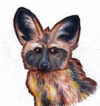 023-Bat-Eared Fox by SpiderMilkshake
