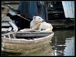 Doglife on Mekong river by mercyop