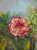 Latest In-Carnation... by Lothrian