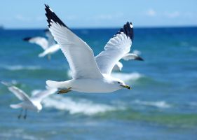 Beach Gulls by El-i-or