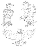 Eagle sketches by Nephilimist