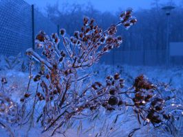 Frozen Nature 1 by Dracofemi