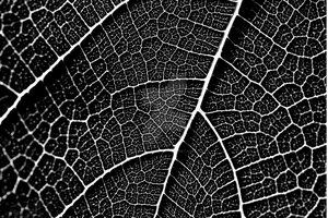 Fig Leaf by iconsPhotography