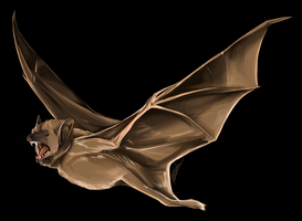 Bat by Susiron