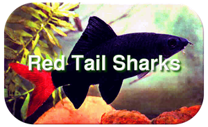 Pondscape 2013 Sharks Page Header by paradigm-shifting
