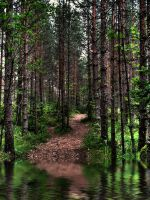 Forest II by jusuart-stock