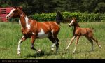 bay overo arabian and foal 1 by venomxbaby