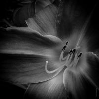 Dream of a Lily by tholang
