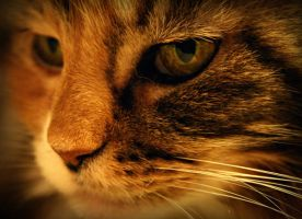 eye of the tiger by givepeaceeachance