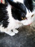 Soggy kitty by Jennybicky