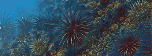 Sea urchins by batjorge