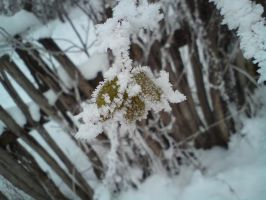Winter by MariaR777
