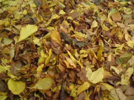 dead leaves by mossi889