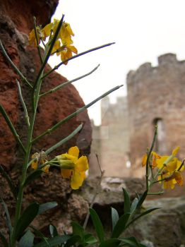 ludlow castle stole my heart by ScurvyNicole