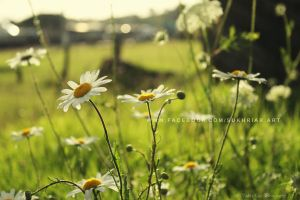 White Flowers by SukhRiar