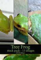 Tree Frog Stock Pack 13 by STOCKher