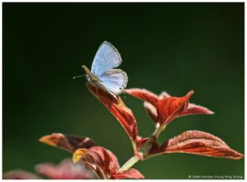 Butterfly by Nicshooter