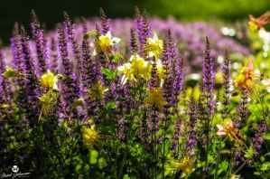 Mix of Yellow and Purple by mjohanson