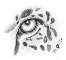 Jaguar eye by LarimarDragon