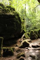 Puzzlewood 31 by Tasastock