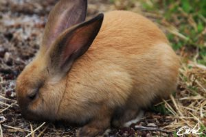 Rabbit by wolmers