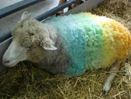 Rainbow Sheep by jenjensatan
