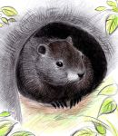 Groundhog by don234a