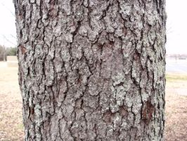 Tree bark by leech3000