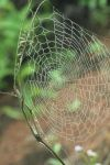 The Web by BioMaschine