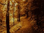 Golden woods by AuXenio